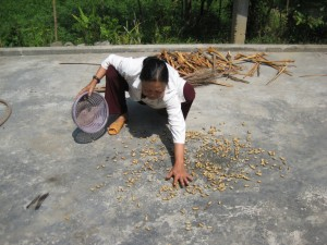 Drying the washed peanuts at grandmother's house